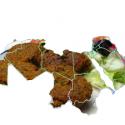 arabische-falafel